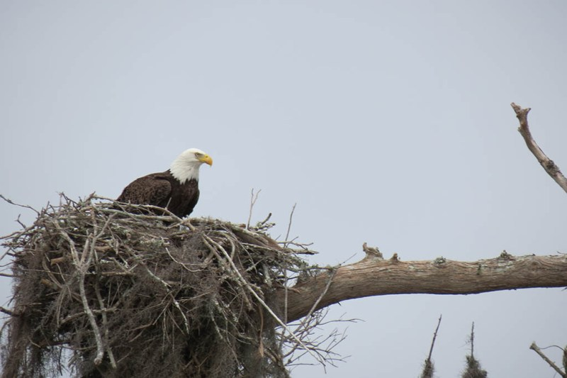 Spotlight Thursday - House-boating on the Suwannee River