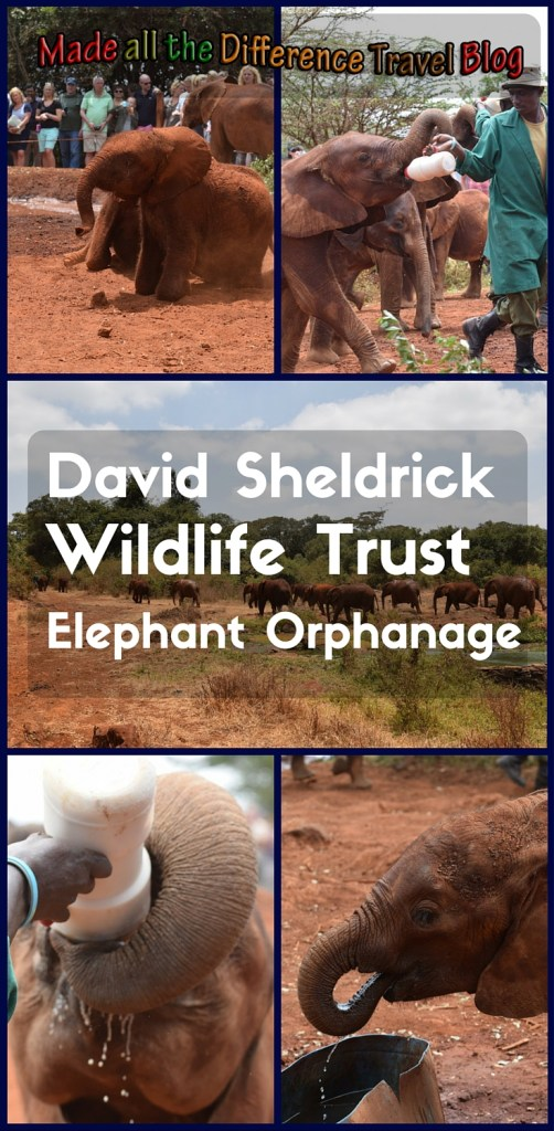 While in Nairobi, Kenya, I spent some time learning about and visiting with the orphan elephants of David Sheldrick Wildlife Trust - Elephant Orphanage.