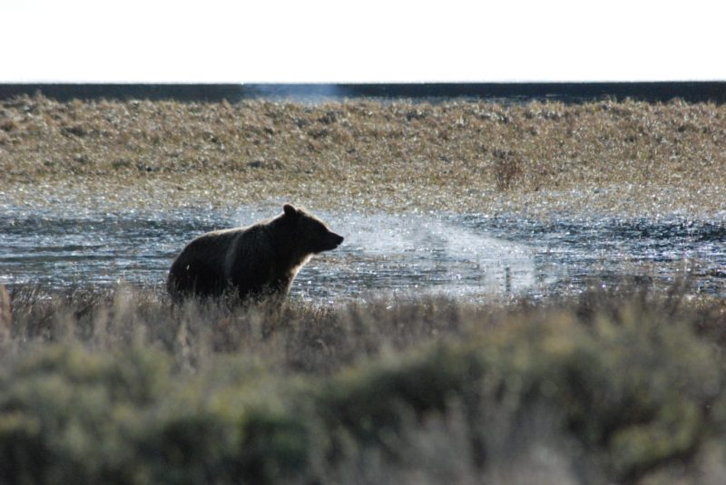 Things to Know Before Visiting Yellowstone National Park