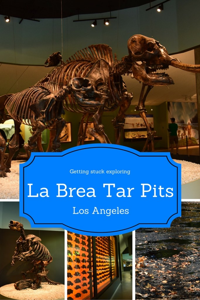 I spent a day exploring what it is like to get stuck in asphalt at the La Brea Tar Pits.