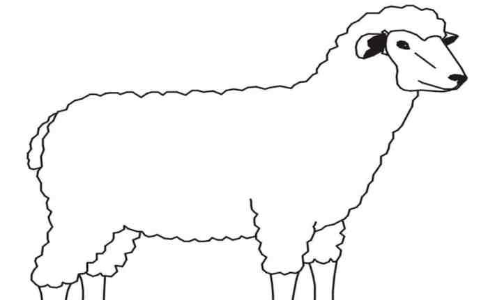 Gambar Sketsa Domba