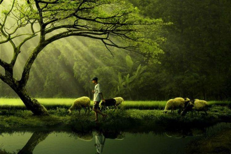 Manfaat Ekologi Bagi Manusia