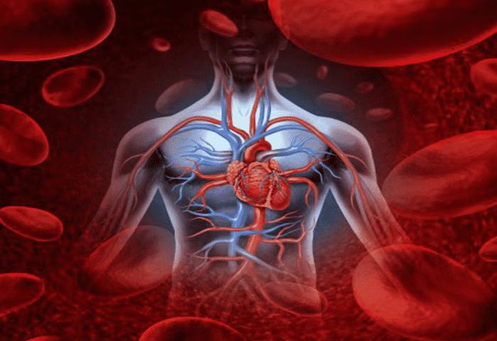 Mengangkut Zat Sisa Metabolisme Sel (Ekskresi)