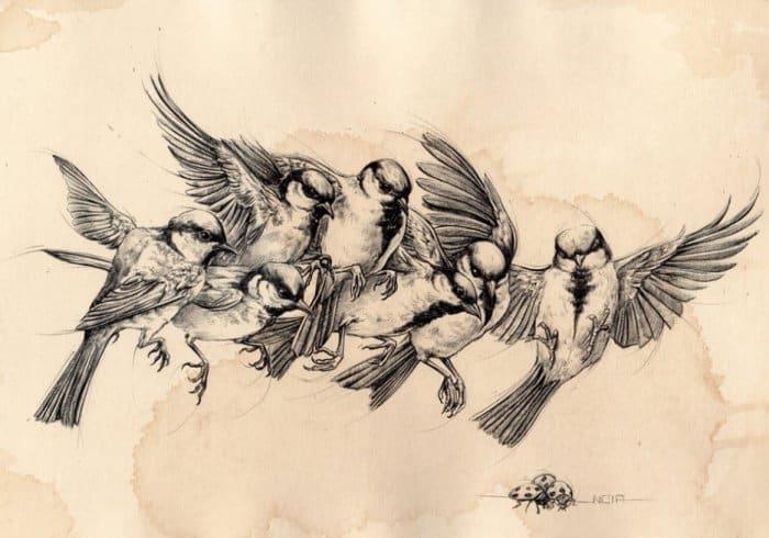 Contoh Gambar Ilustrasi Burung