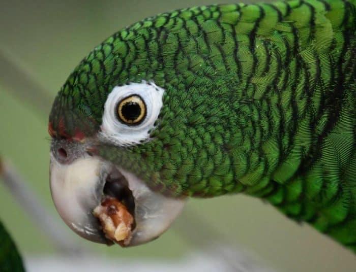 Harga Burung Beo Di Pasaran