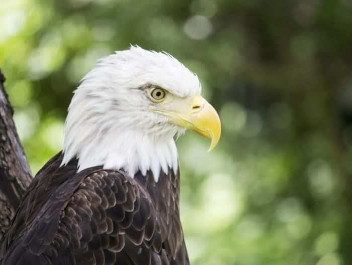 Nilai Filosofi yang Ada di Burung Elang yang Bisa Dijadikan Sebagai Pedoman