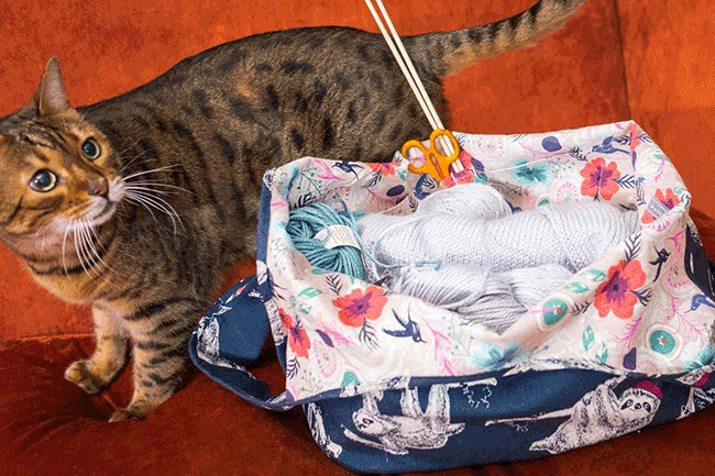 Begal cat and project bag size comparison