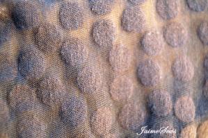 Omni Tempore Pattern by Sofilantjes | JaimeSews
