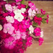Beautiful flowers from the market! A perfect house warming present from Brenna Peterson of The Commerce Supper Club.