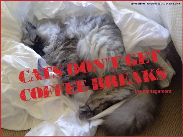 cats don't get coffee breaks