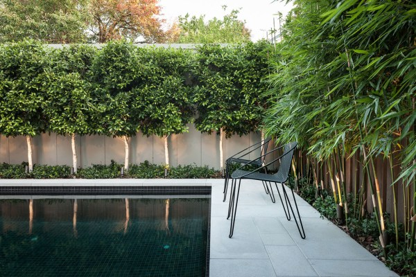 superb bamboo fence rollin pool