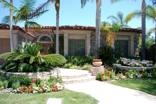 palm tree landscaping with shrubs