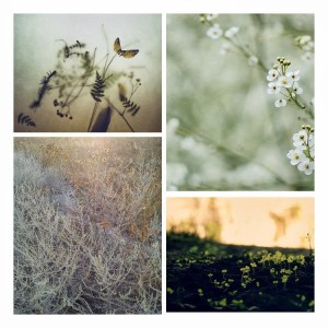 Tiny Nature 003