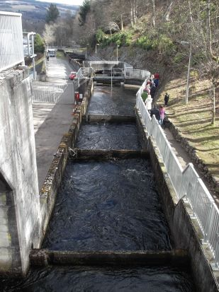 Top of the fish ladder from the dam