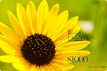 Sunflower Fields Portrait Experience Gift Card