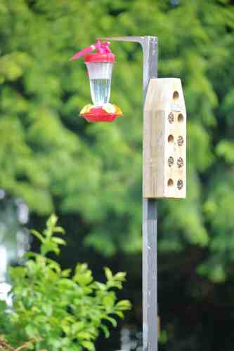 Make your own hummingbird food. It's easy, cheap and healthier for the birds! For the recipe and other helpful tips visit Made in a Pinch and follow us on Pinterest!2