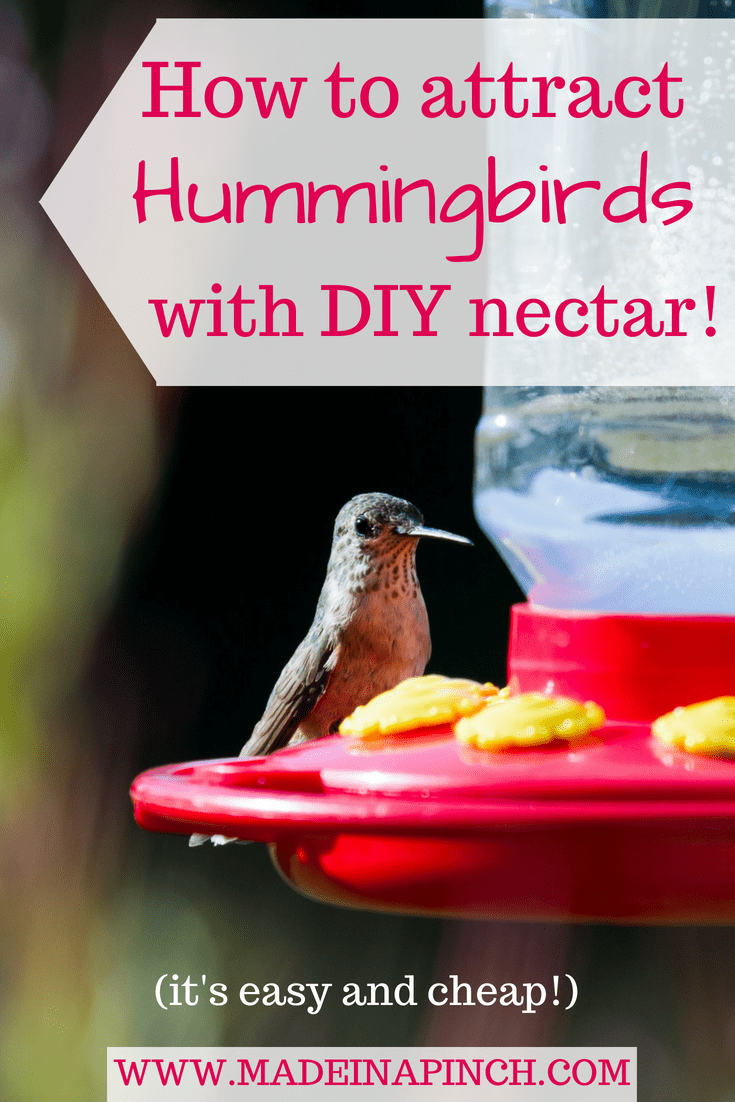Recipe For Healthy Hummingbird Food