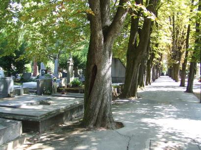 mirogoj-avenida2.jpg