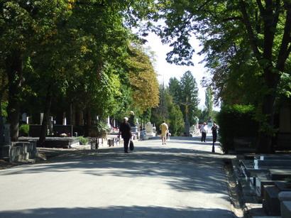 mirogoj-avenida3.jpg