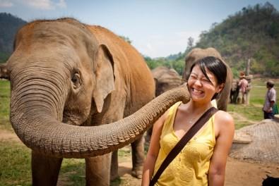 elephant-thailande (1)
