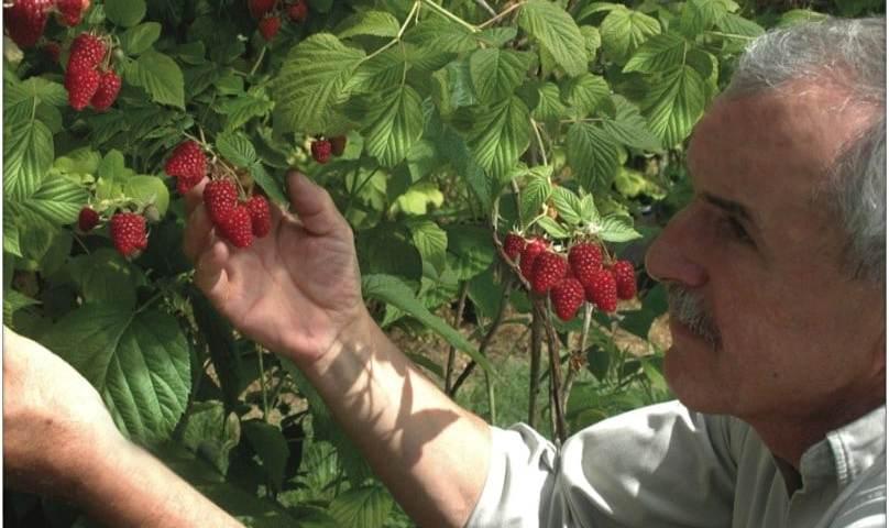 André dans son exploitation de fruit.