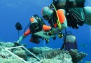 Expédition Tara Pacific – Des chercheurs perpignanais au secours des récifs coralliens