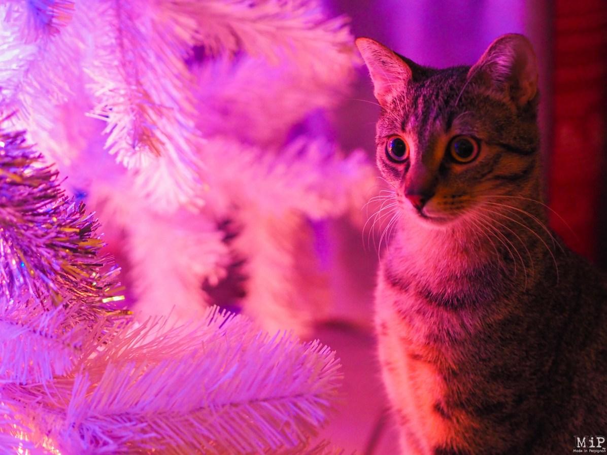 Chat Noël -050298