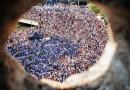 Champions du monde – Perpignan célèbre la deuxième étoile des bleus