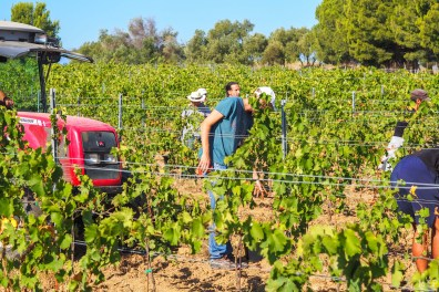 Vins du Roussillon-5