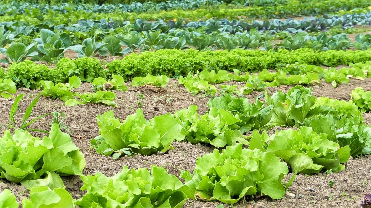 W Agriculture © Arnaud Le Vu / MiP / APM