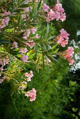 jardin mediterraneen biodiversarium