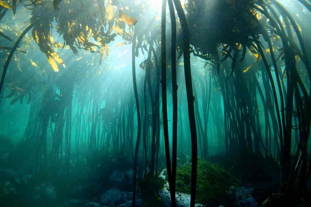 La Sagesse de la Pieuvre © Sea Change Project