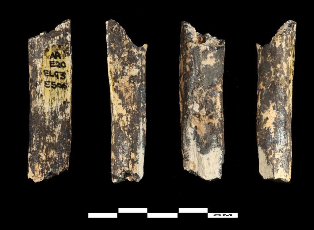 Fragment de fibula © Musée de Préhistoire de Tautavel