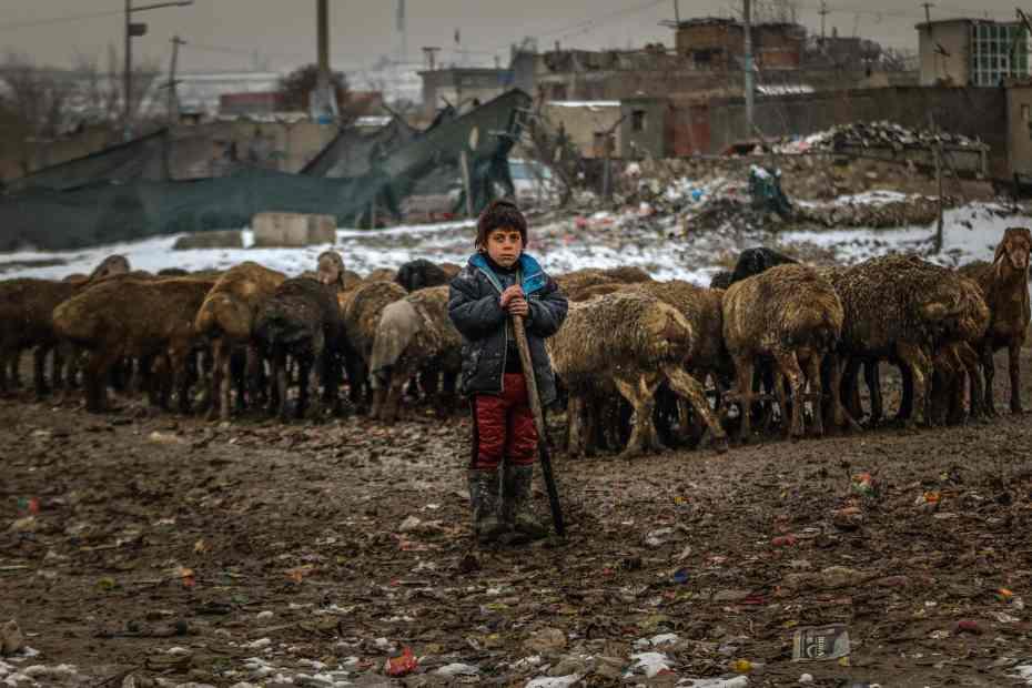 Woman in blue jacket standing beside sheep