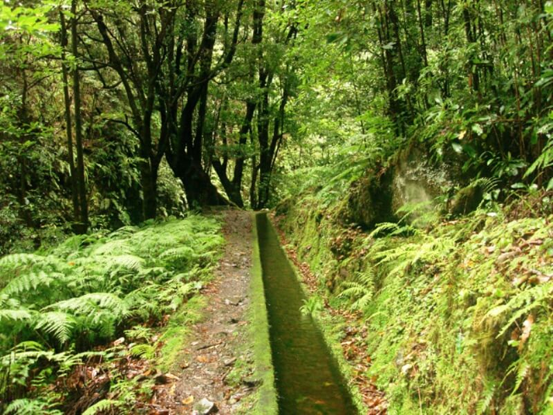King's Levada Walk (Medicinal herbs) and Northeast views in Madeira (8)