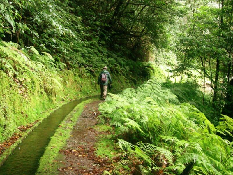 King's Levada Walk (Medicinal herbs) and Northeast views in Madeira (9)