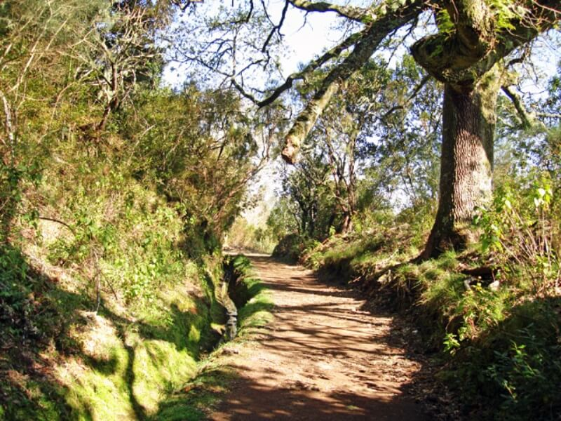 Paradise Valley Levada Walk in Madeira (4)