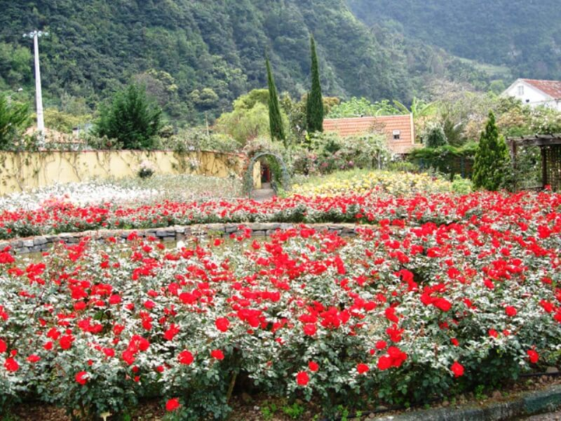 Rose Garden Tour Full Day Excursion in Madeira (6)