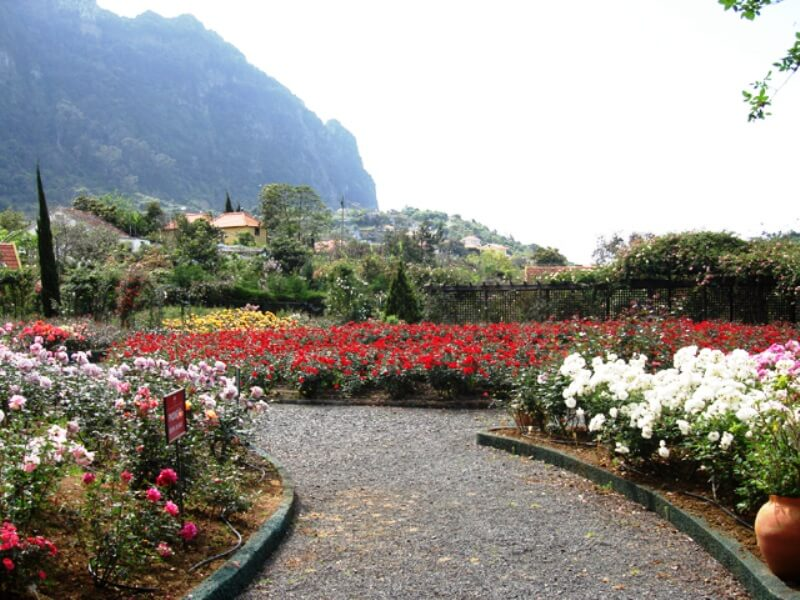 Rose Garden Tour Full Day Excursion in Madeira (7)
