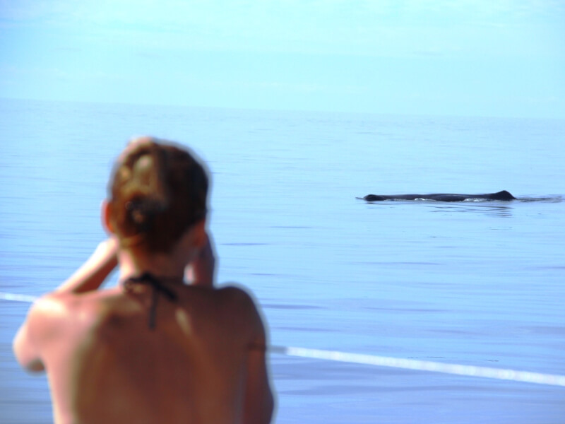 Dolphin & Whale Watching in Madeira Island (1)