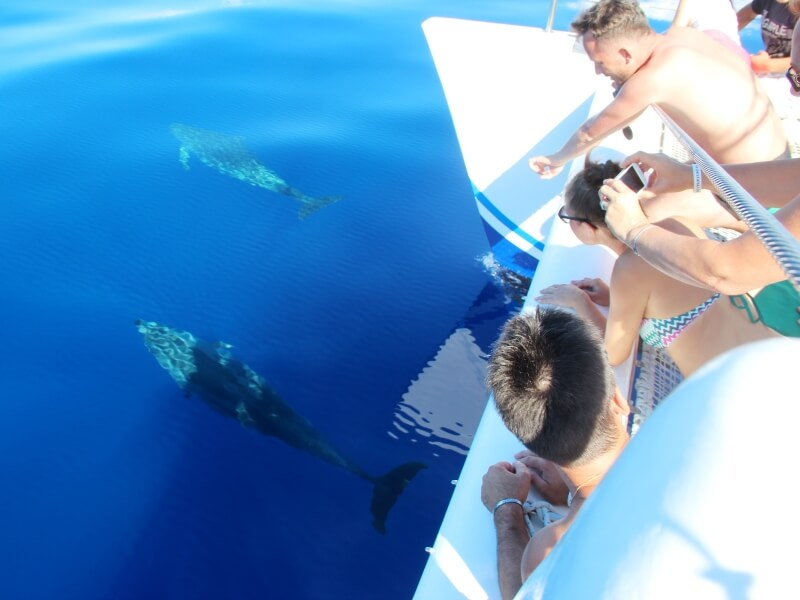 Dolphin & Whale Watching in Madeira Island (9)