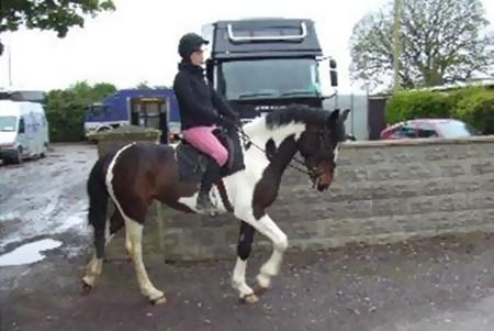 horse schooling