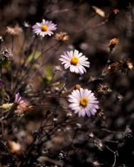 california_flowers_by_madelynne_nehl_01