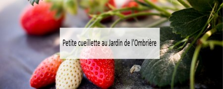jardin-de-lombriere-made-me-happy-blog-bassin-arcachon-(cover)