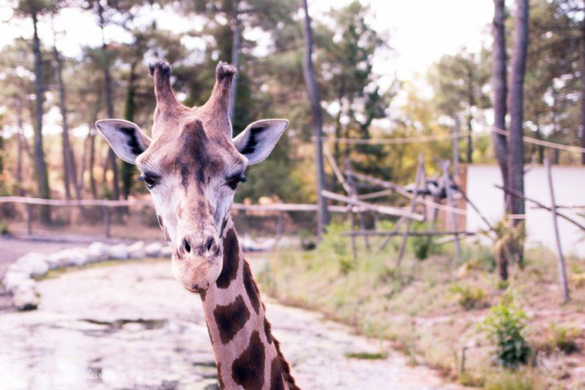 Zoo Bassin d'Arcachon 2016-23