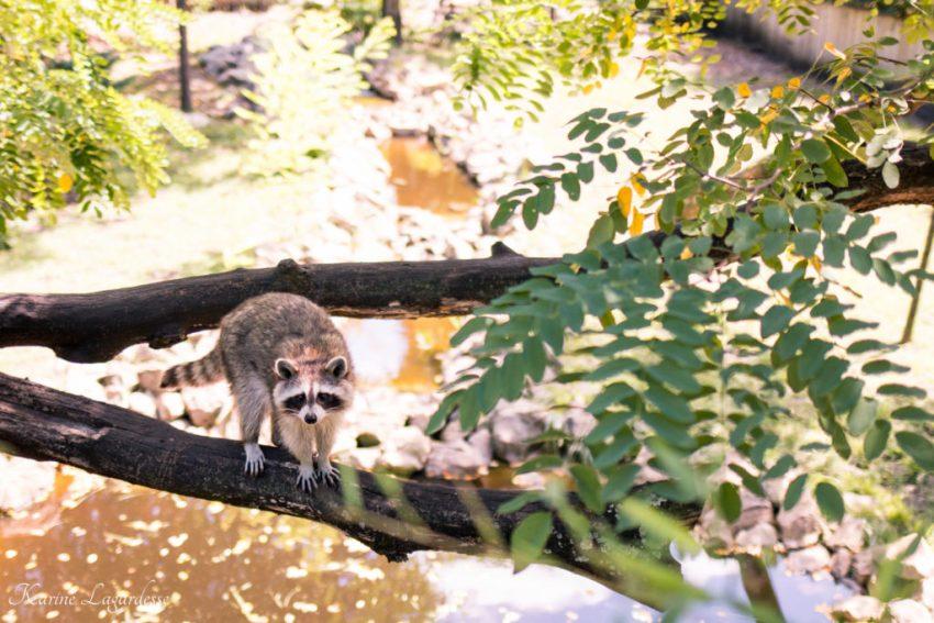 Zoo Bassin d'Arcachon 2016-26