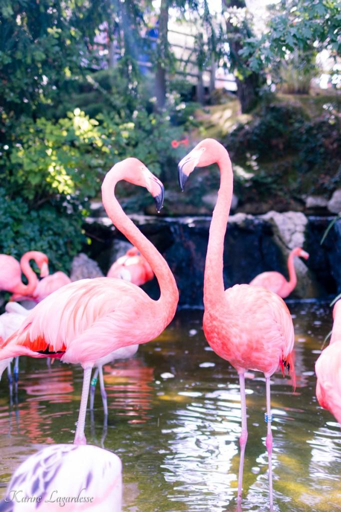 zoo-palmyre-made-me-happy-blog-bordeaux-19