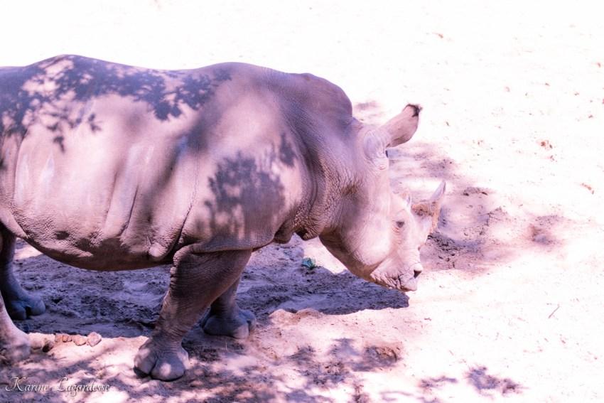zoo-palmyre-made-me-happy-blog-bordeaux-32