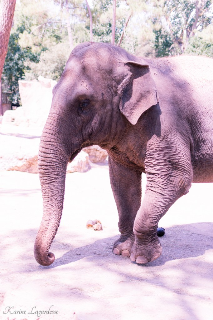 zoo-palmyre-made-me-happy-blog-bordeaux-45