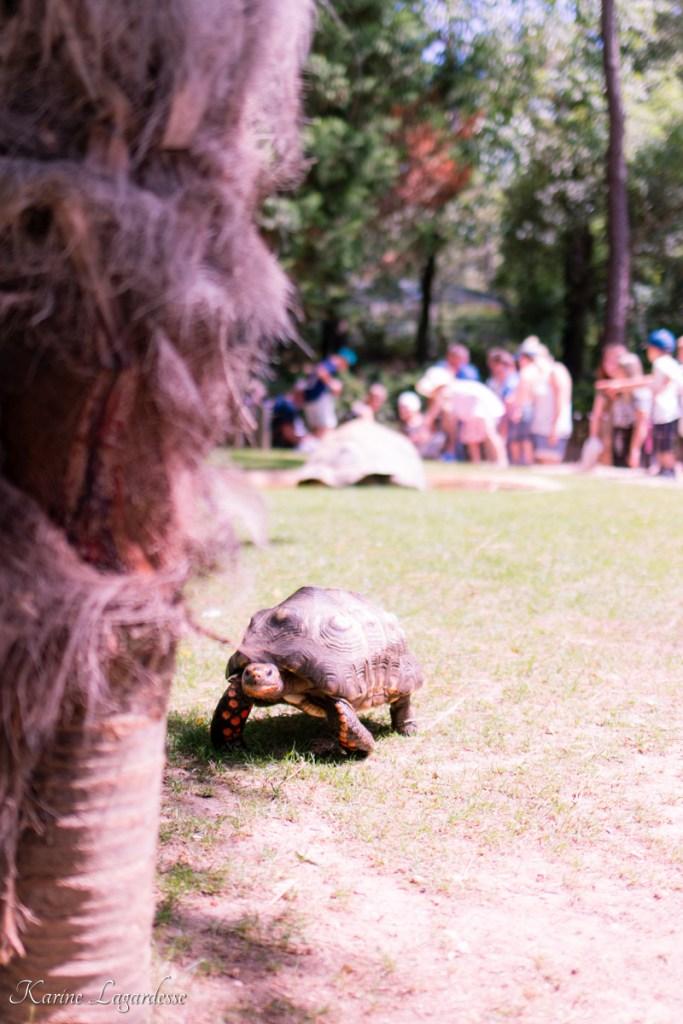 zoo-palmyre-made-me-happy-blog-bordeaux-57